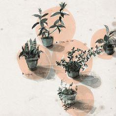 plantas del balcón Elizabeth Builes