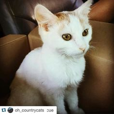 #Repost @oh_countrycats with @repostapp.  #Repost @satans_pilgrim with @repostapp.  #Repost @catscatscatsrescue with @repostapp  PLEA TO HELP HUXLEY - It seems we've been hit by disaster after disaster  and emergency this week. This is Huxley. He's the sweetest boy and he has only one possibility at life. He needs a blood transfusion and hospitalization and we need to raise approximately TWO THOUSAND dollars. We just don't have it. He means a lot to us all here at Cats cats cats Rescue he's…