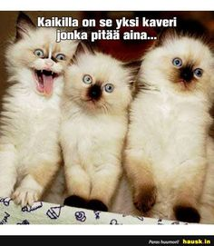 Kaikilla on se yksi kaveri. Funny Meems, Funny Animals, Cute Animals, Cat Heaven, Live Life, Sarcasm, Funny Pictures, Humor, Memes