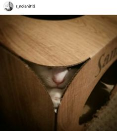 We absolutely adore this picture of Sammie!  there is so much naughty fun in that one little nose  Thanks so much @r_nolan813  #cat #catsofinstagram #cats_of_instagram #catfurnature #catfurniture #catsinboxes #cattoy #INSTACAT_MEOWS #cutecat #PurrMachine #catsinboxes #catbox #Excellent_Cats #BestMeow #dailykittymail #thecatniptimes #catcube #catpod #ArchNemesis #FlyingArchNemesis #myindoorpaws #ififitsisits #cutecatcrew #catchalet #catnip #themeowdaily #kitty #catpyramid #catgrass