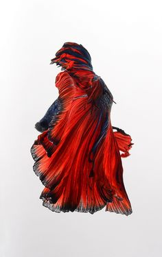 Фотография red cloak автор visarute angkatavanich на 500px