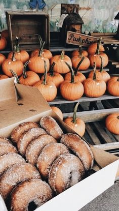 Fresh pumpkins at the pumpkin patch and cinnamon sugar donuts. Fall inspiration and photo ideas. Things to do during fall. Dessert bar inspiration ideas for brunch, birthday party, Halloween party. Vsco, Autumn Cozy, Autumn Fall, Autumn Leaves, Fall Harvest, Autumn Feeling, Autumn Witch, Harvest Moon, Autumn Aesthetic