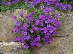 Rock Garden Plants, Garden Paths, Miss Green, Landscaping With Rocks, Landscaping Ideas, Rock Wall, Small Flowers, Terrazzo, Garden Projects