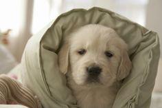 Ancora 5 minuti!!!   Buongiorno da questo cucciolo che vuole restare a letto :)