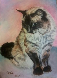 Carrie the Ragdoll - Pastel on Paper