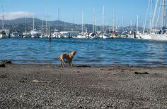 Having fun #photography #fujifilmxt2 #dogs #beach