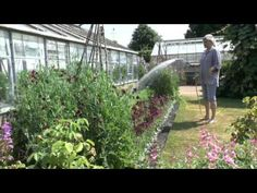 How best to keep your plants watered during the dry summer months.