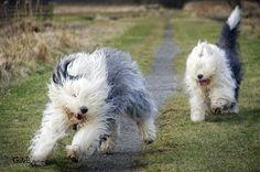 You run ... I pursue...ft Rhea & Lisa - #RheaenLisa