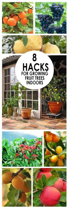 Indoor Gardening, Fruit Tree Gardening, Indoor Gardening Hacks, Fruit Tree Growing, How to Grow Fruit Indoors, Gardening 101, Popular Pin