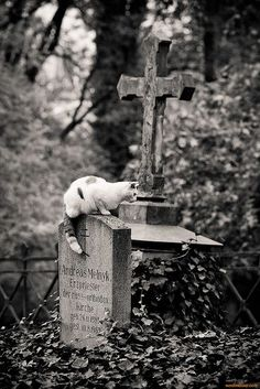 Waiting for God: a graveyard cat at the historic Weimar Cemetery in Thuringen, Germany, 2007 - by Wolfram Schubert, German Cemetery Statues, Cemetery Headstones, Old Cemeteries, Cemetery Art, Graveyards, Angel Statues, Memento Mori, Belle Photo, Cat Love