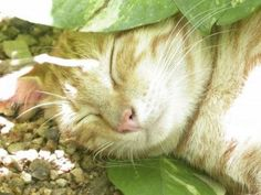 Cat-Friendly Garden Ideas: Tips For Creating A Cat-Friendly Garden - If you are a cat lover and a gardener, you want to make your garden friendly to your feline friends. There are things you can add to your garden to help your cats and your plants get along together. Read this article to learn more about making your garden cat friendly.
