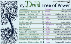 Druid's Magical Trees of the Year - Celtic Astrology - Magical Recipes Online Celtic Astrology, Astrology Zodiac, Celtic Druids, Celtic Paganism, Magical Tree, Book Of Shadows, Wisdom, Gain, Norse Symbols
