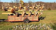 MN/HUNTING: Minnesota DNR has seized 37 guns and 28 sets of antlers in poaching case - http://www.gunproplus.com/mnhunting-minnesota-dnr-seized-37-guns-28-sets-antlers-poaching-case/