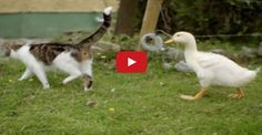 A Mother Cat and Her Yellow, Feathered Kittens