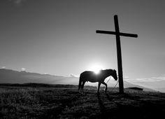 Praying Horse....