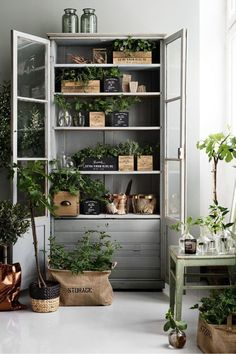 Table For Plants | Future Home Inspiration | Pinterest | Plants, Gardens  And Houseplants