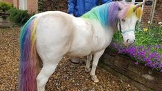 One Woman Grooms Her Horses To Look Like Unicorns Majestic Unicorn, Real Unicorn, Unicorn Horse, Magical Unicorn, Cute Unicorn, Unicorn Pictures, Unicorn Crafts, The Fox And The Hound, Pony Party