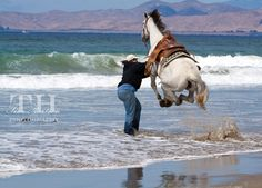 at the right time  tim-hartson-horse