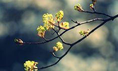 Гисметео Украина: погода на 14 апреля - ожидается незначительное похолодание
