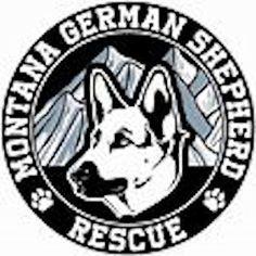 Montana German Shepherd Rescue German Shepherd Breeders, Montana, Flathead Lake Montana