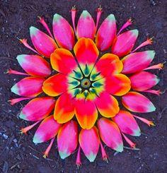 kathy klein mandalas flores