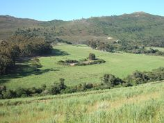 Our 'vineyard' in January 2006 - what a different place it is now Seven Springs, South Africa, Vineyard, January, Mountains, Places, Nature, Travel, Naturaleza
