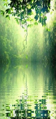 Soft summer rain in the forest