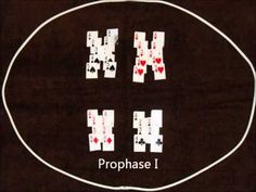Mitosis and Meiosis with a Deck of Cards - YouTube