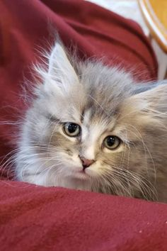 Happy Animals, Cute Funny Animals, Cute Kittens, Cats And Kittens, Beautiful Cats, Animals Beautiful, Small Cat, Tier Fotos, Baby Cats