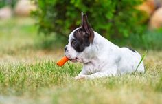 Why don\'t you spice up your dog's taste buds once in a while with some juicy, tasty fruit and vegetables, I do it for my dog all the time.