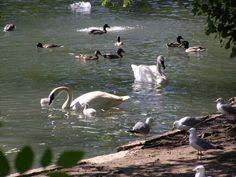 Lincoln Park Zoo, Chicago, Illinois, USA