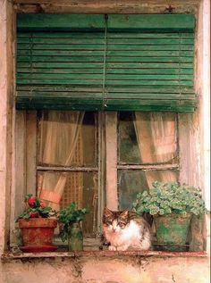 """MISS FELINA"" LOVES TO SIT ON THIS SILL AND WATCH TO COMINGS & GOINGS OF OUR NEIGHBORS.......MOST OF THEM GIVE HER A FRIENDLY PET & TALK TO HER.........I THINK SHE CONSIDERS HERSELF THE ""QUEEN OF ADWEN STREET""...........ccp"