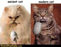 Ancient vs. Modern Cat