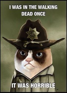 """Sheriff Rick Tard Grimes (Grumpy Cat as Sheriff Rick Grimes from the TV show """"The Walking Dead"""") Walking Meme, The Walking Dead, Grumpy Cat Humor, Cat Memes, Grumpy Kitty, Funny Cats, Funny Animals, Funniest Animals, Funny Jokes"""
