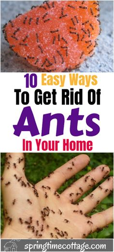Diy Household Tips 644225921685312072 - Here are 10 tips and tricks plus some easy cleaning hacks to get rid of ants in your home and garden without using harmful chemicals. Source by springtimecottage Diy Home Cleaning, Household Cleaning Tips, House Cleaning Tips, Diy Cleaning Products, Cleaning Solutions, Cleaning Hacks, Cleaning Schedules, Cleaning Agent, Household Products
