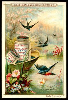 "Liebig's Beef Extract  ""Birds & Flowers"" German issue, 1892"