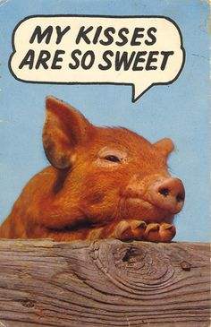 Because we are definitely going to have a Kiss A Pig contest this year for FFA week!