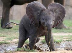 elephants <3 for Emily