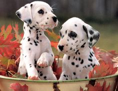 Spots.... Spots everywhere!!