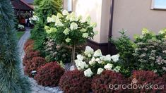 Organic Gardening How To Product Garden Forum, Hydrangea Paniculata, Tulips Garden, Organic Gardening, Garden Design, Landscape, Walled Garden, Beautiful Gardens, Tips