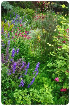 The 367 best perennials that bloom all summer images on pinterest in colorful vibrant perennial flowers johannas garden perennial gardens garden borders flowers perennials mightylinksfo