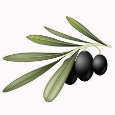 Αποτέλεσμα εικόνας για illustrations of olive tree