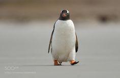 Just a penguin by ElmarWeiss via http://ift.tt/2nUGyJ0