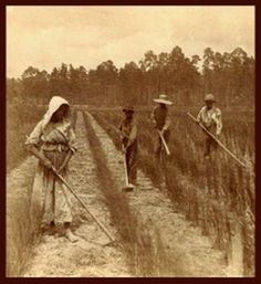 """""""Georgia rice field workers."""" Original image available from DocSouth, UNC."""