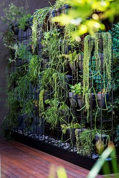 Industrial-style urban courtyard:This green wall, located on the deck level of the courtyard, consists of a steel box frame with hand-thrown pots perched inside. Plants include varieties of mistletoe cactus (*Rhipsalis*) and string of pearls (*Senecio*).