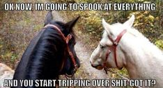 This is probably what really happens on trail rides. Hahaha - Horses Funny - Funny Horse Meme - - This is probably what really happens on trail rides. Hahaha The post This is probably what really happens on trail rides. Hahaha appeared first on Gag Dad. Funny Horse Memes, Funny Horse Pictures, Funny Horses, Cute Horses, Funny Animal Memes, Pretty Horses, Horse Love, Beautiful Horses, Funny Animals
