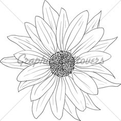 Floral Design Element And Hand Drawn , Vector I...