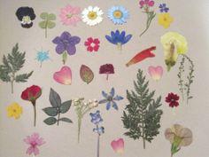 Pressed Flower craft ideas