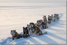 I want to go mushing one day.