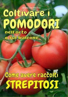 Begonia, Plantar, Vegetables, Blog, Hobby, Rome, Solar, Crafts, Flowering Plants
